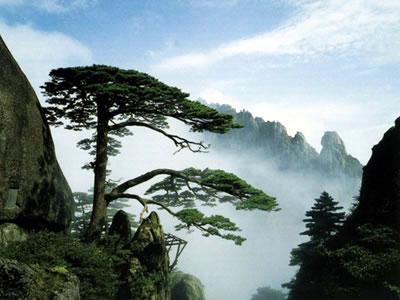 黄山节庆活动_花期有约2016安徽各地春季节庆活动一览旅