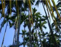 �|郊椰林