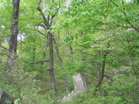 南阳内乡县宝天曼原始森林