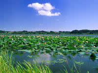 济宁微山湖生态区