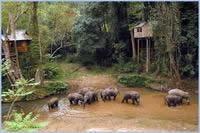 西双版纳有动植物王国之称